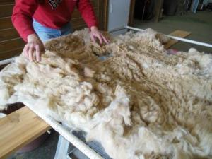 Gordon lays out Clovis Mae's baby fleece