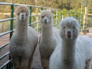 Woolies