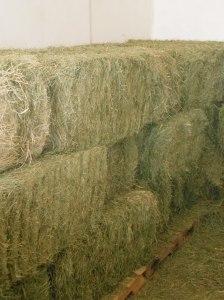 Hay Stall