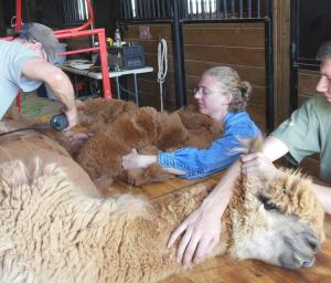 Taking Fleece