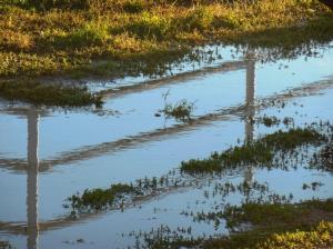 Standing Water
